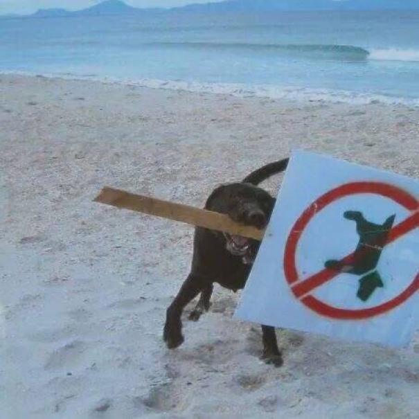 30 фото животных, которые плевали на ваши правила