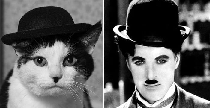Животные-двойники знаменитостей (36 фото)