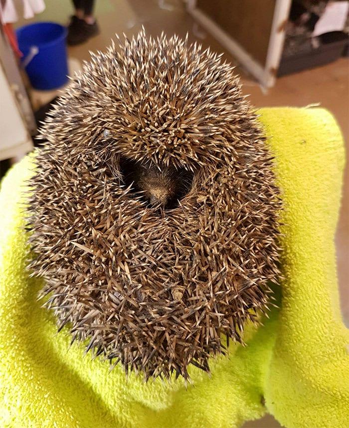 Ветеринары, которым принесли этот комок грязи, подумали, что над ними шутят. Но вдруг он чихнул!