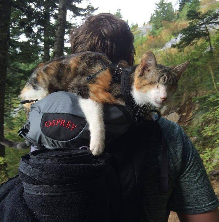 Женщина приютила слепую кошку и обнаружила, что у той необычное хобби