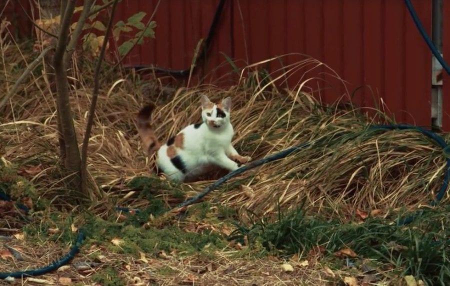 Дружелюбная кошка вмешалась в интервью и стала звездой экрана