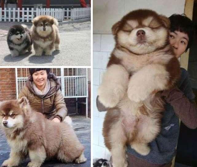 Дети любви собак разных пород
