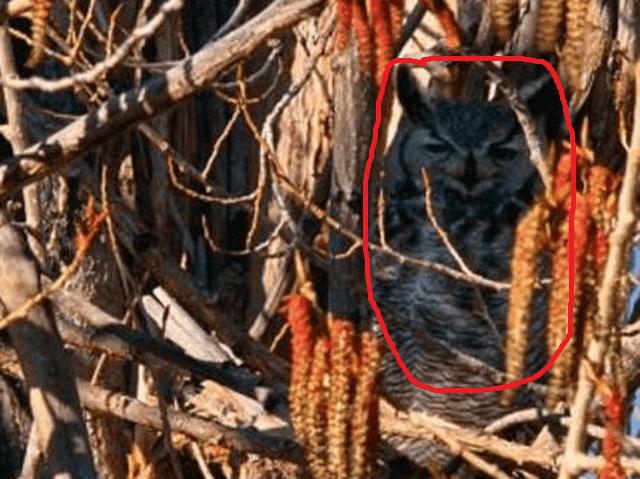 Большинство людей не могут найти животных на этих 9 фото