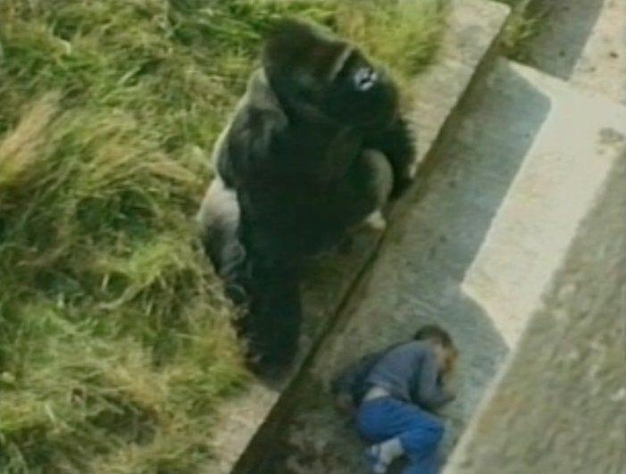 8 трогательных историй спасения людей животными