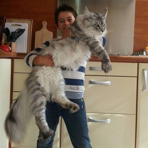Кошатникам на заметку! 30 интересных фактов о кошках + несколько полезных советов