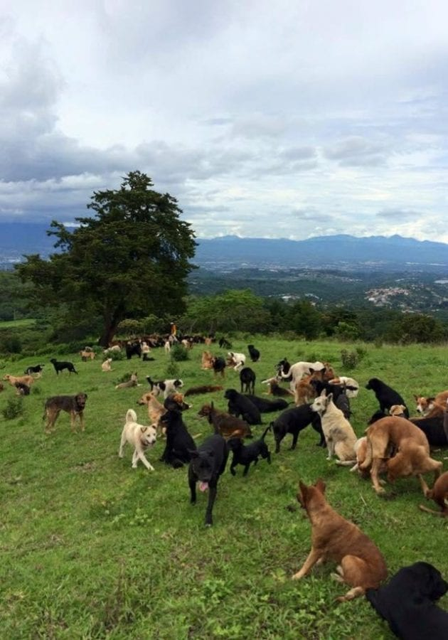 Семейная пара спасла уже более 1000 собак и не намерена останавливаться