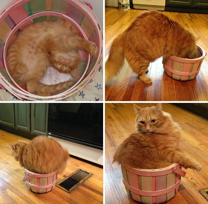 30 кошек, устроившихся в самых неожиданных местах