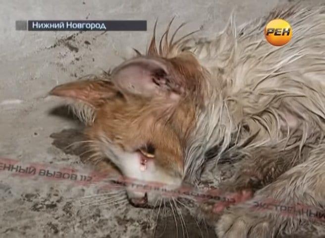 Удивительная реакция кота, спасенного людьми из смертельной ловушки (ВИДЕО)