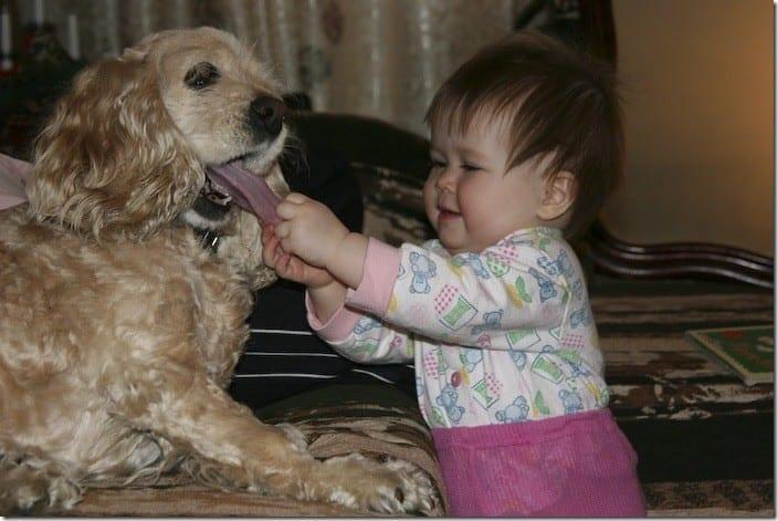 Животные, которые живут с детьми, попадают в рай без очереди