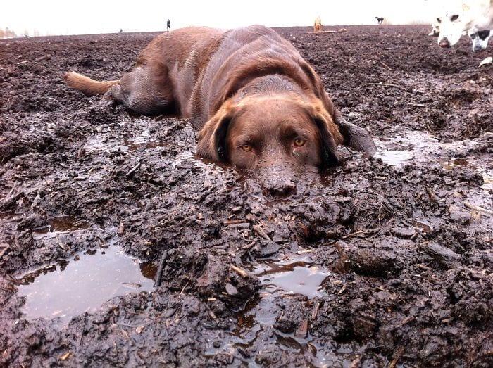 30 собак, чьи хозяева сильно пожалели, что отстегнули поводок