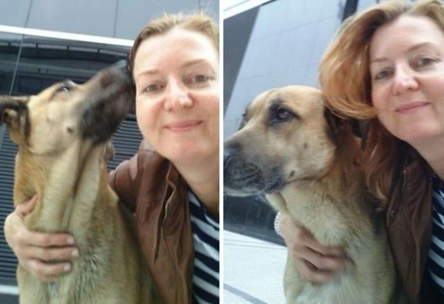 Бродячий пес полгода встречал стюардессу у дверей отеля, и она это оценила