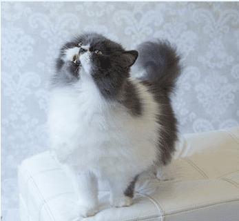 Кот, которого все считали пoгибшим, вдруг ожил