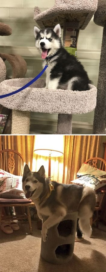30 фото собак, которые думают, что они — кошки
