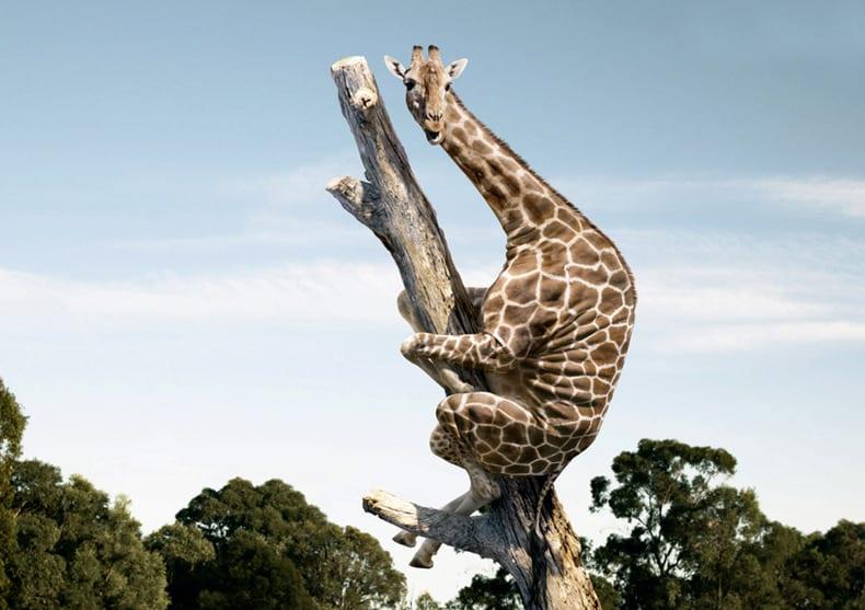 26 фото распоясавшихся животных