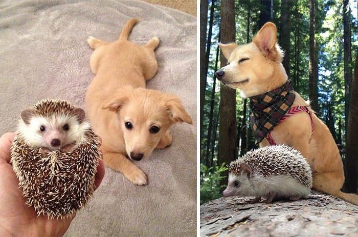 25 фотоисторий, как животные выросли вместе
