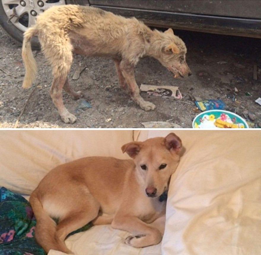 30+ фото собак до и после усыновления