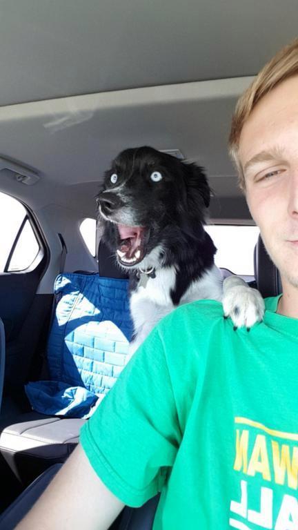 19 фото собак для хорошего настроения