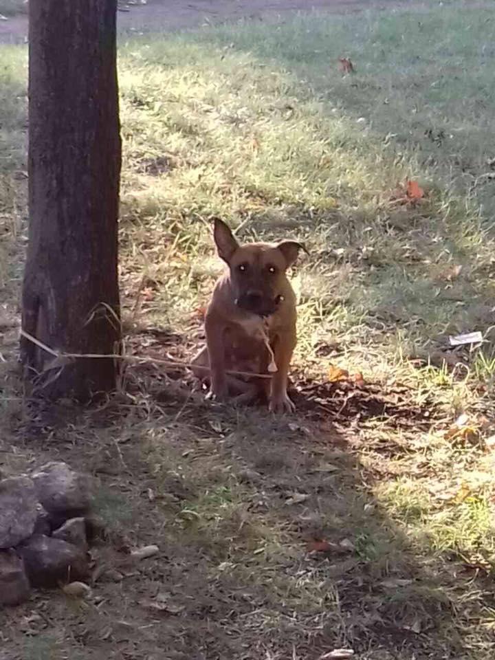 Хозяин привязал пса в парке, написал в записке его кличку и ушел навсегда