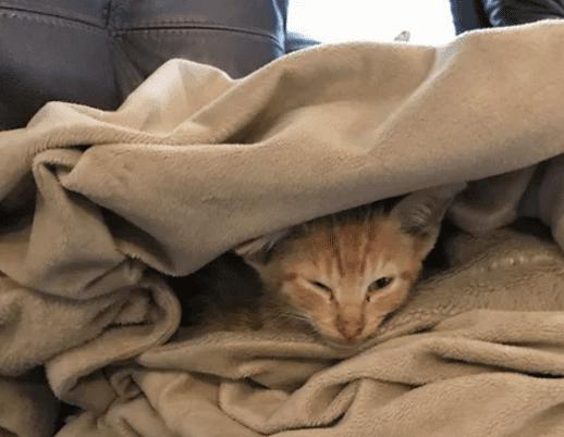 У котенка практически не было шансов на спасение, но один молодой человек рискнул - и не прогадал