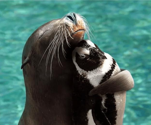 40+ фото звериных обнимашек