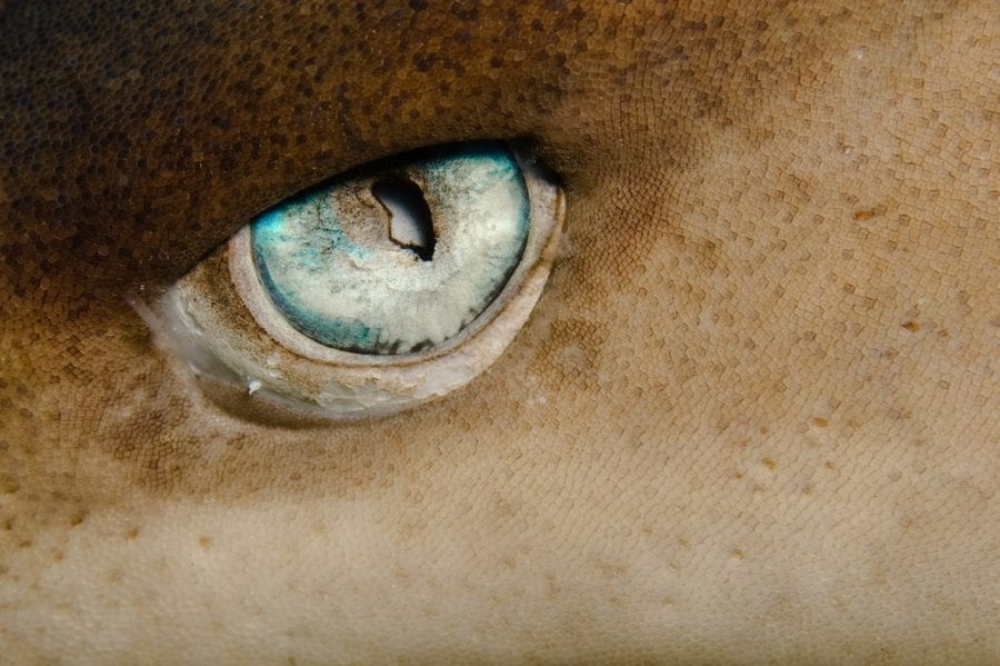 Тест: угадайте животное по кусочку фото. 22 невероятные загадки.