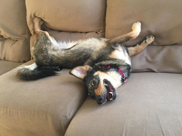 25 фото животных после посещения ветеринара