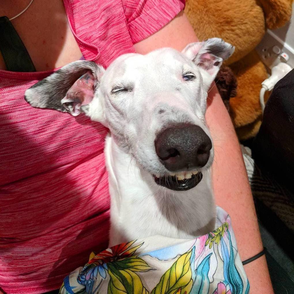 ВИДЕО: Собака смешно клацает своими необычными зубами