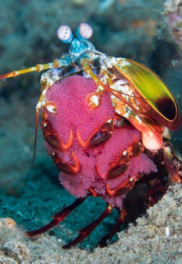 Удивительные обитатели подводного мира на 17 фото Марти Снайдермана