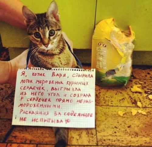 18 провинившихся котов, которым совсем не стыдно