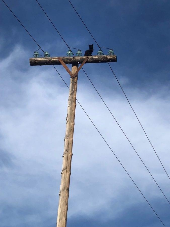 В Туве целый поселок отключили от света для спасения кота
