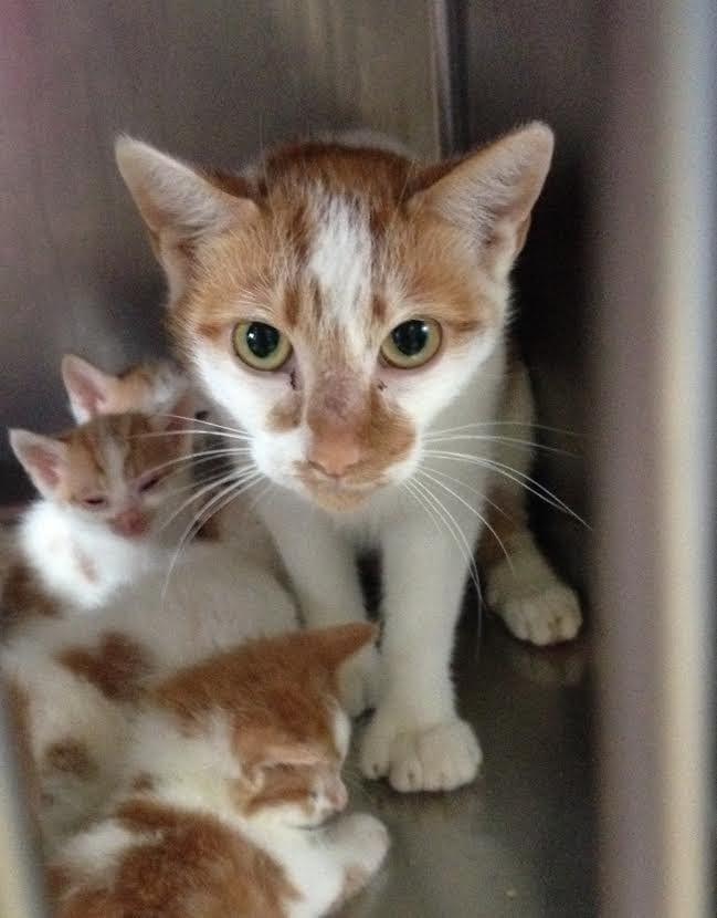 Женщина сломала стену дома, чтобы спасти необычных котят