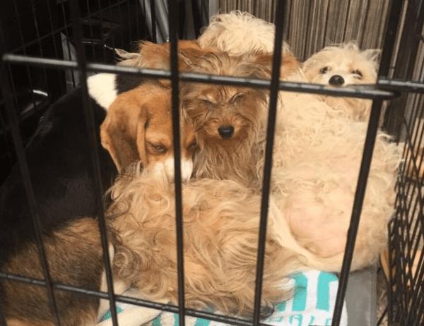 Шесть разнопородистых щенков выбрoсили в голом поле, но им очень повезло