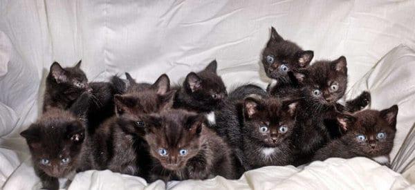 Выйдя из дома, женщина обнаружила старый чемодан с 15 котятами