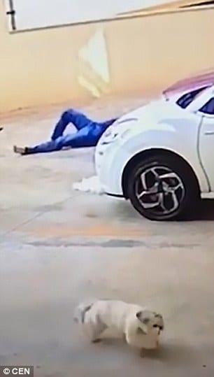 ВИДЕО: Бразилец спас собаку, упавшую с балкона 9 этажа