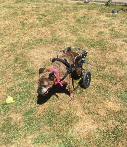 Женщина за свой счет создала хоспис для собак