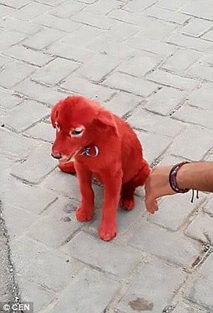 Мужчина купил на рынке красную собаку