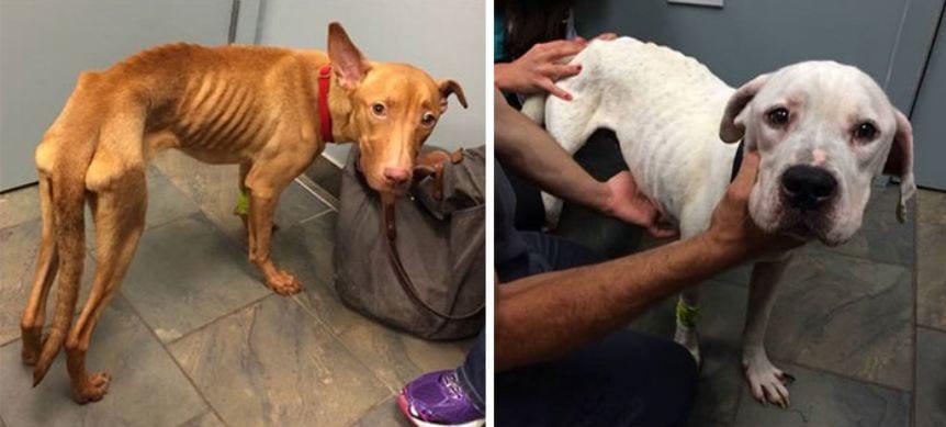 Полицейские спасли от верной гибeли двух отчаявшихся щенков