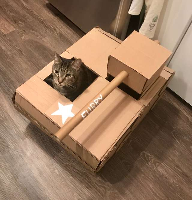 Мужчина смастерил для кота домик мечты