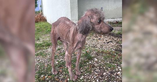 Женщина обнаружила в запертом пустом доме трех собак