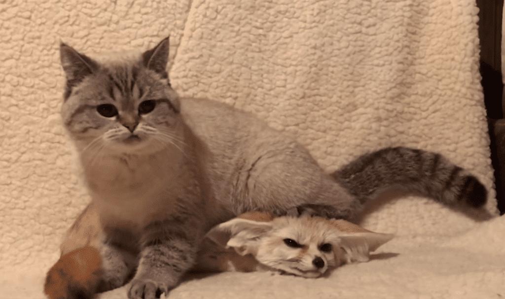 Необычная парочка друзей живет в московской квартире