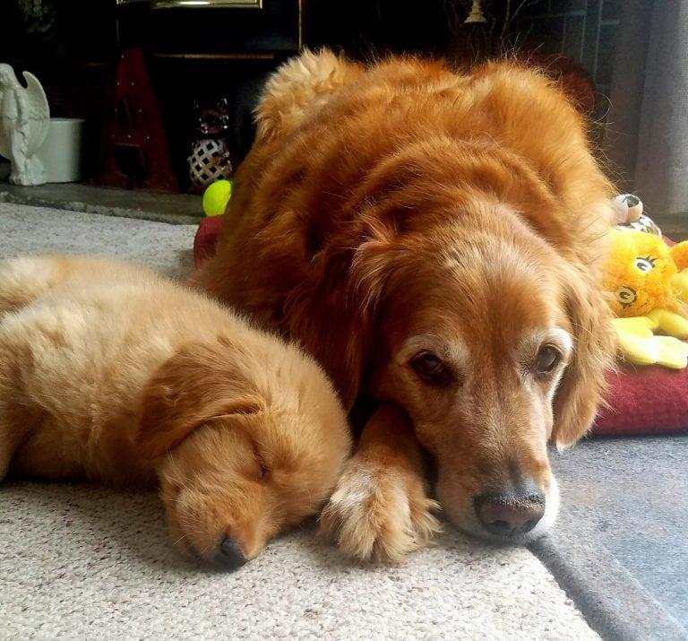 Старый пес скучал по своей умершей подруге, а на Рождество случилось чудо