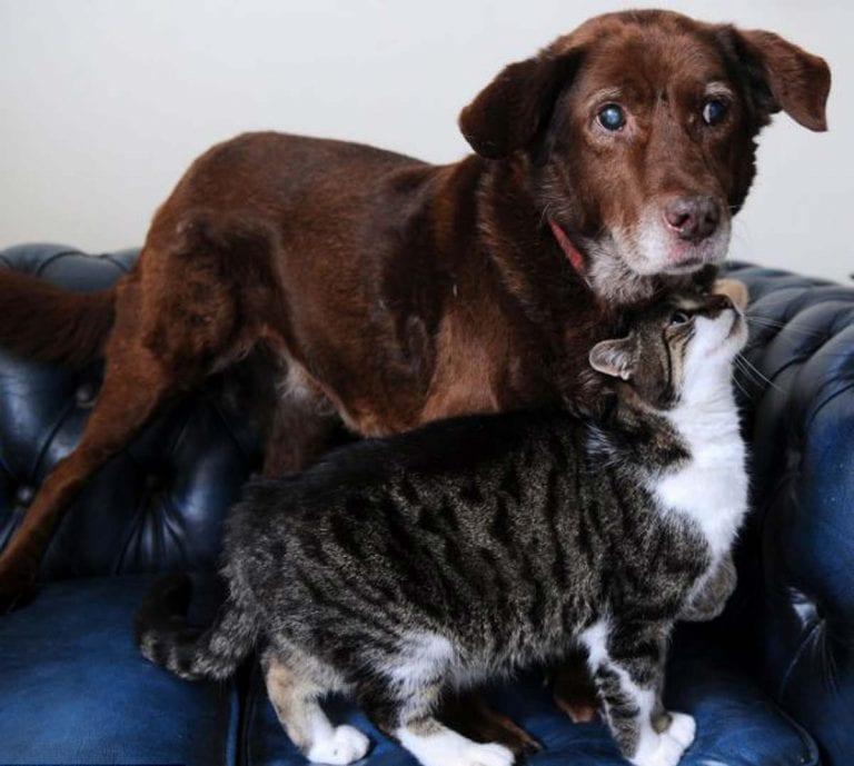 Слепоглухая собака несколько лет боялась ходить, но новый друг перевернул ее жизнь