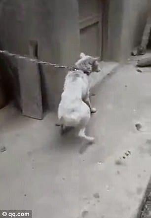 Отравленная и похищенная для продажи собака нашла путь домой