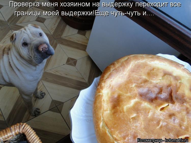 """17 собак, для которых слово """"выдержка"""" - не пустой звук"""