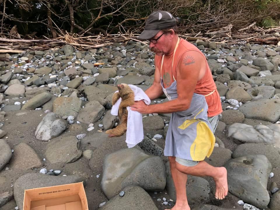 После отлива пара нашла на берегу между камнями загадочный комок шерсти