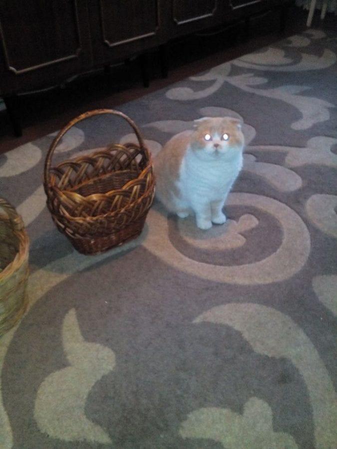 23 фото пасхальных зайцев, корзин и... котов