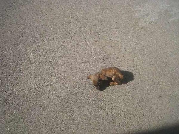 На прогулке подруги заметили на проезжей части маленький кусочек меха