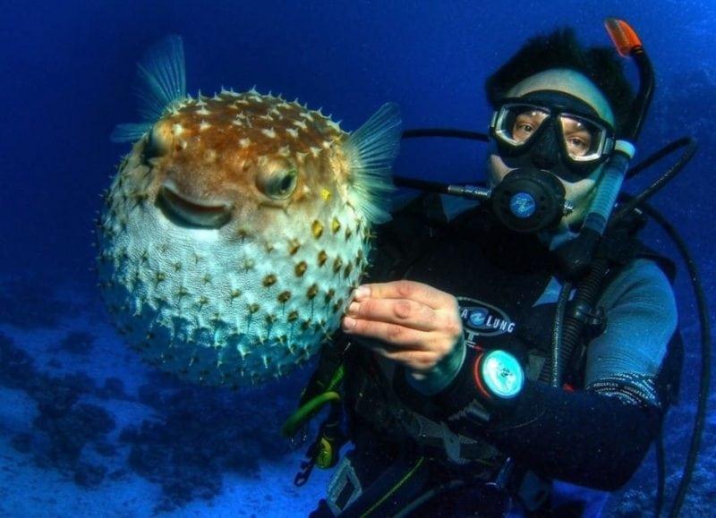 Фото и интересные факты о ядовитой рыбе фугу