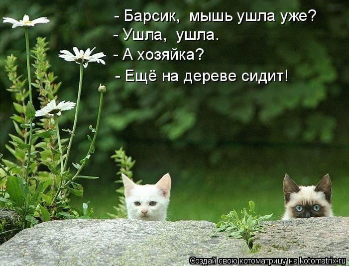 Доказательства того, что у животных тоже есть чувство юмора