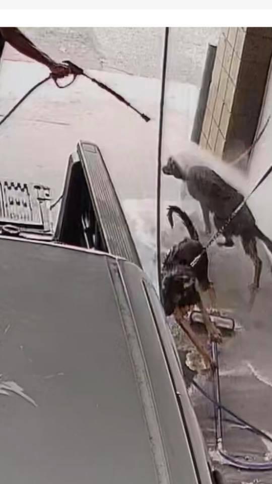 Мужчина решил помыть собак на автомойке и был арeстован